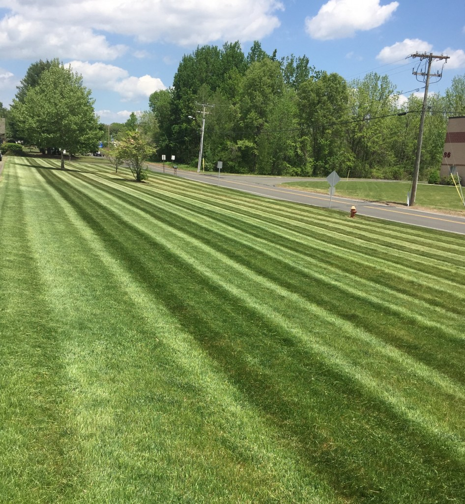 commercial-mowing